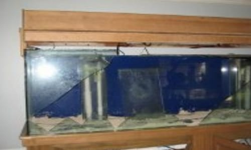 Broken Salt Water Fish Tank Insurance Claim