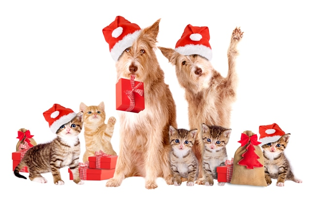 Safety Tips to Protect Your Pets This Holiday Season
