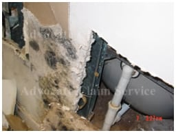 Toxic Mold Insurance Claims